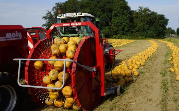 Moty pumpkin seed harvester