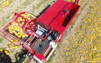 Moty Kürbiskern Erntemaschine